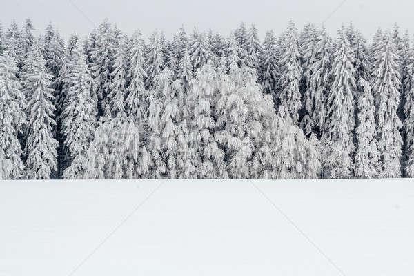 Spokojny zimą krajobraz drzew pokryty śniegu Zdjęcia stock © artush
