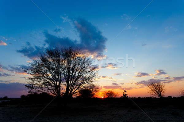 Сток-фото: африканских · закат · дерево · игры · резерв