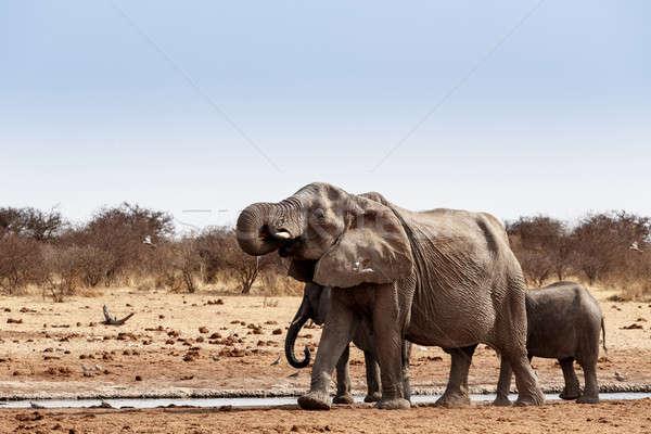 Turma african elefantii potabilă plin de noroi parc Imagine de stoc © artush