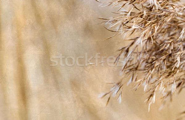 natural background retro color effect Stock photo © artush