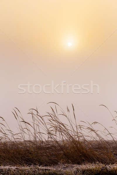 Puslu sabah gündoğumu çim soğuk sıcak Stok fotoğraf © artush