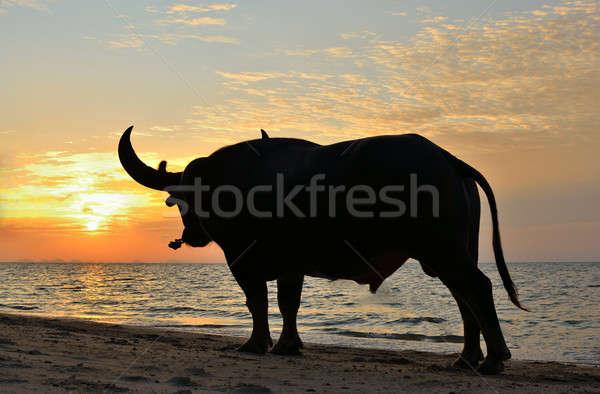 buffalo Stock photo © arztsamui