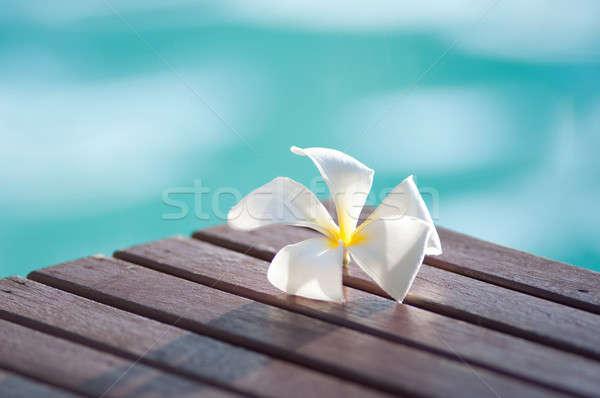 Сток-фото: белый · Blossom · природного · символ · цветочный