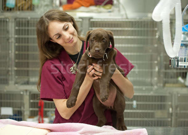 young puppy at the vet's Stock photo © aspenrock