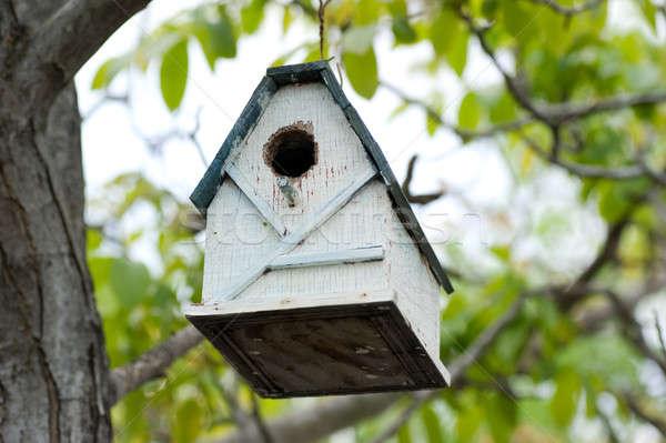 Beyaz kuş ev sevimli yeşil yaprakları ağaç Stok fotoğraf © aspenrock