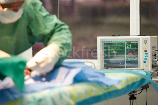Stock photo: focus on a life monitor for a cat under anesthesia