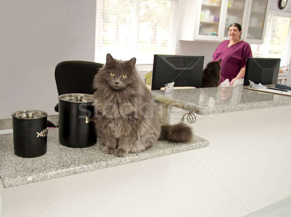 Kedi resepsiyonist kediler ofis balık pencere Stok fotoğraf © aspenrock