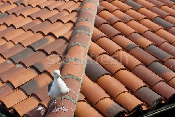 Nieuwsgierig zeemeeuw Rood tegel dak Stockfoto © aspenrock