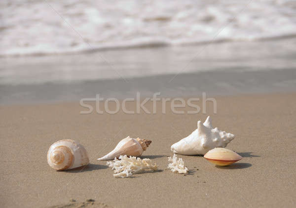 sea shells on the beach Stock photo © aspenrock