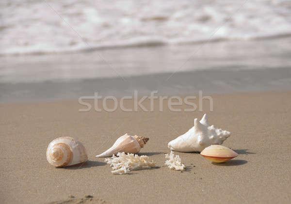 Deniz kabukları plaj kum sörf dalga Stok fotoğraf © aspenrock