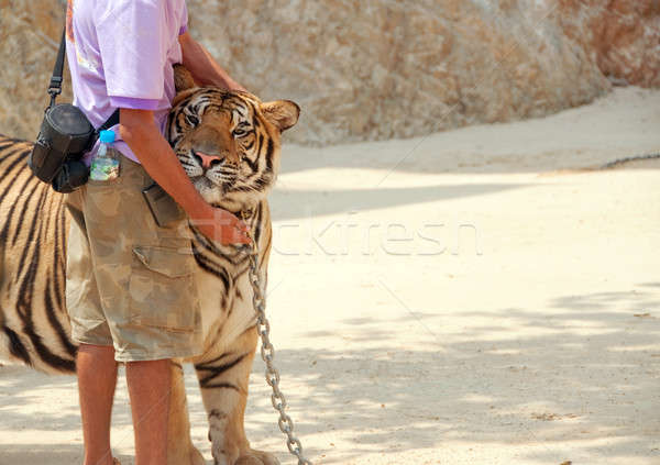 tiger and zoo keeper Stock photo © aspenrock