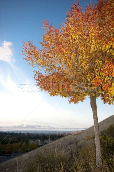 ツリー 丘 オレンジ 葉 秋 ストックフォト © aspenrock