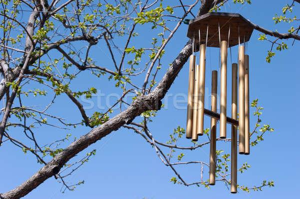 Rüzgâr bahar açılış ağaç parlak mavi gökyüzü Stok fotoğraf © aspenrock