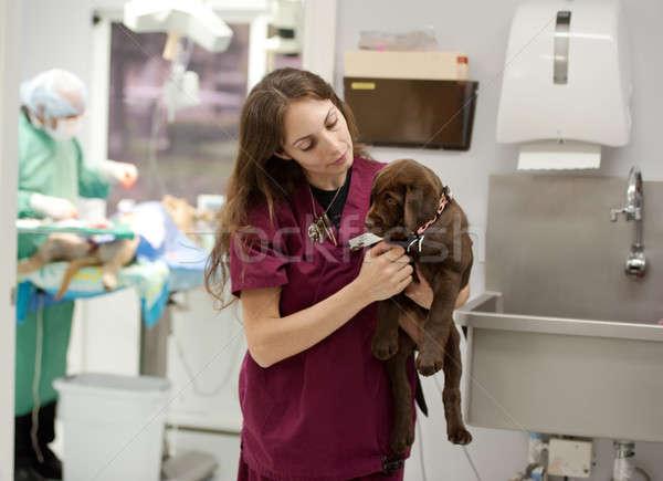 Meşgul veteriner uygulama hemşire laboratuvar köpek yavrusu Stok fotoğraf © aspenrock