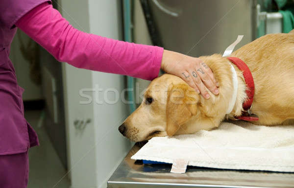 loving hand of a nurse Stock photo © aspenrock