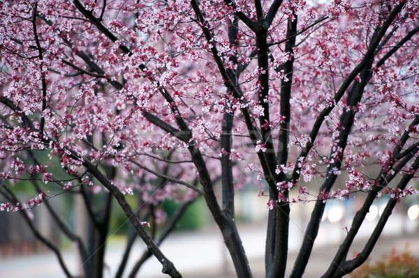 ぬれた ツリー コントラスト ピンク 暗い ストックフォト © aspenrock