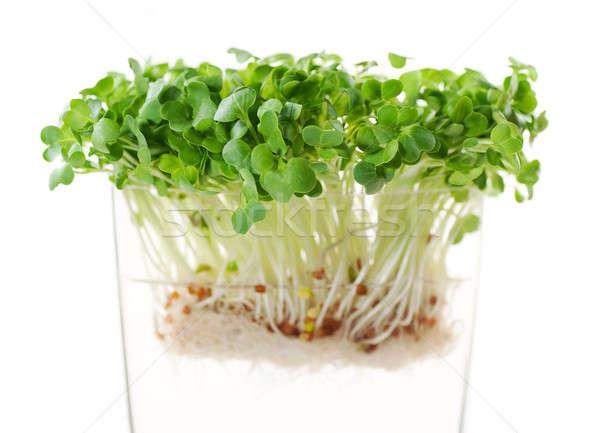 Yeni turp tohumları besleyici tok c vitamini Stok fotoğraf © aspenrock