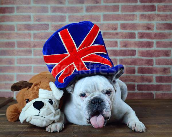 Portrait of French bulldog hat with the flag of the united kingdom Stock photo © asturianu