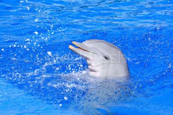 Delfin jasne niebieski wody piękna szczęśliwy Zdjęcia stock © asturianu
