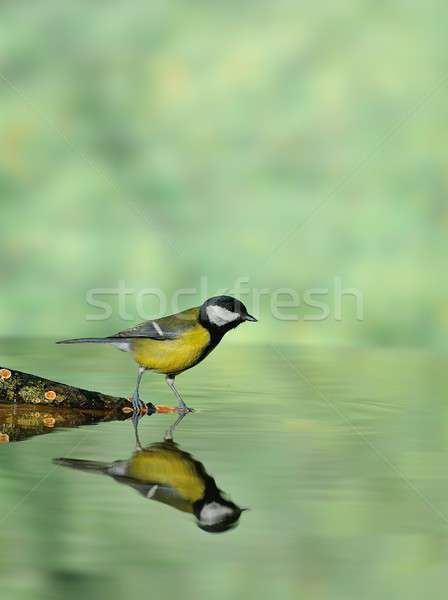 Foto stock: Teta · água · potável · lagoa · verde · luz