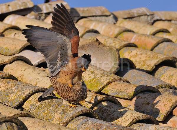 男性 女性 自然 鳥 フライ 動物 ストックフォト © asturianu