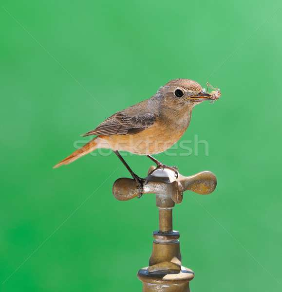 Bird and faucet. Stock photo © asturianu
