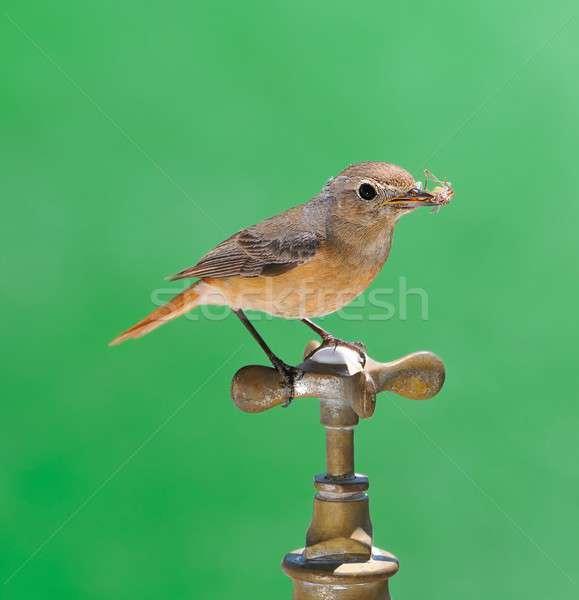 Aves grifo aislado verde agua naturaleza Foto stock © asturianu