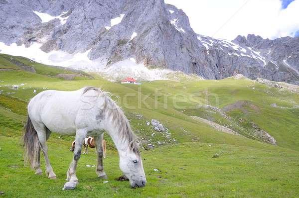 Wild horse. Stock photo © asturianu