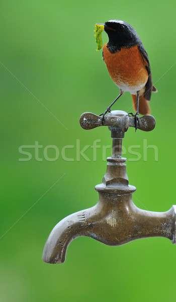 Forrás madár vízcsap természet csepp folyadék Stock fotó © asturianu