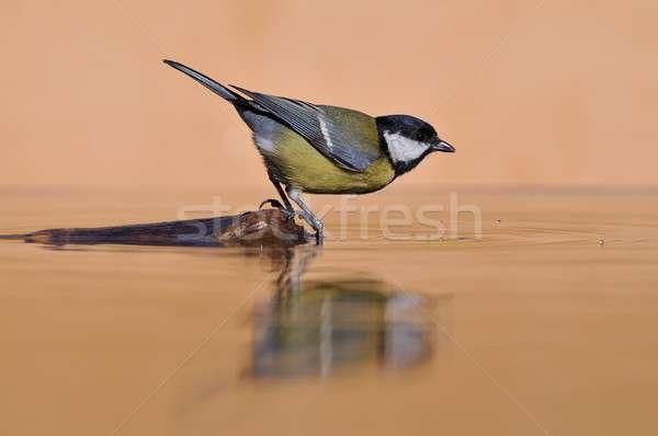 Teta ramo água vista lateral pássaro Foto stock © asturianu