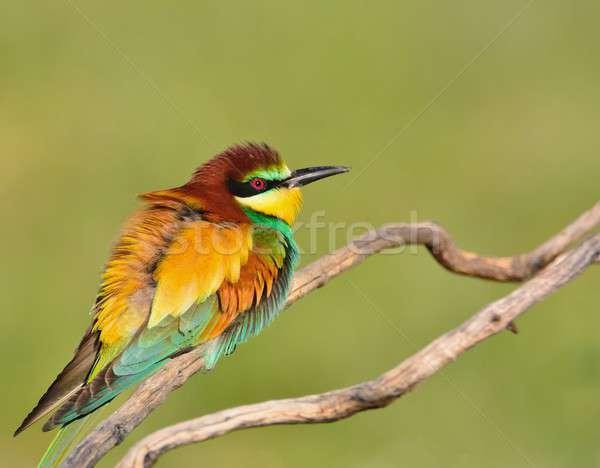 Colorido brilhante verde fundo Foto stock © asturianu
