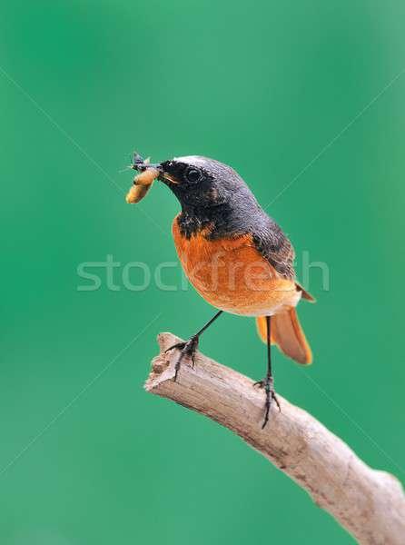 добыча грех птица птиц цвета цветами Сток-фото © asturianu