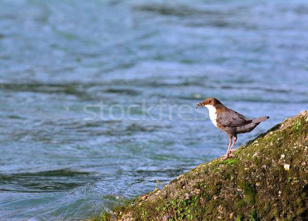 Mech rock europejski rzeki wody Zdjęcia stock © asturianu