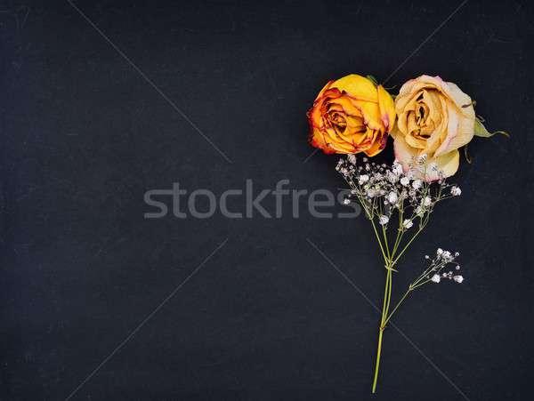 натюрморт закрывается завода мертвых фон черный Сток-фото © asturianu