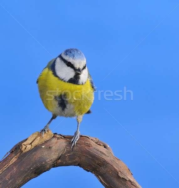 青 売り言葉 庭園 鳥 緑 生活 ストックフォト © asturianu