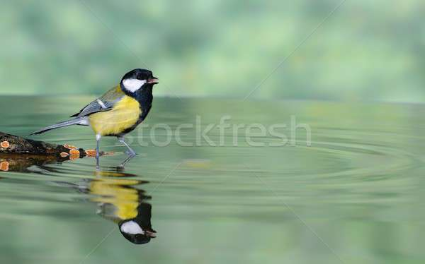 Water and bird. Stock photo © asturianu