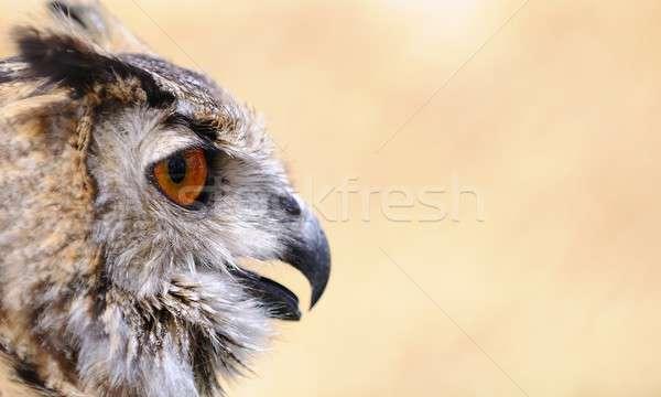 Coruja marrom pássaro retrato Foto stock © asturianu