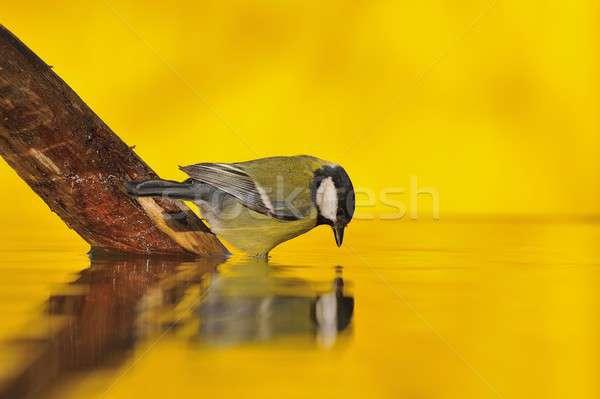 Foto stock: Teta · água · potável · lagoa · dourado · luz