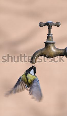 Great tit. Stock photo © asturianu