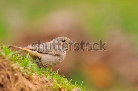 Jovem feminino grama primavera floresta fundo Foto stock © asturianu