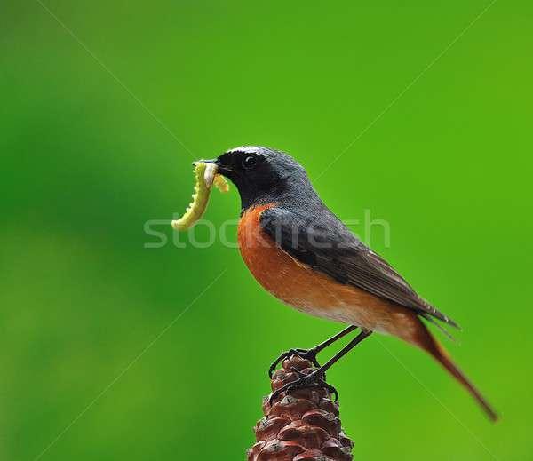 Caça lagartas comida aves vida cor Foto stock © asturianu