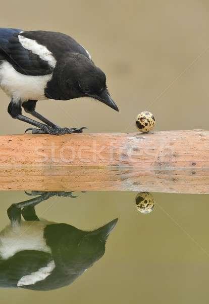 çim bahçe yumurta arka plan alan kuş Stok fotoğraf © asturianu