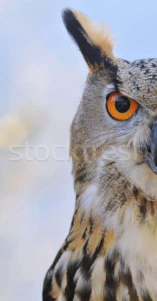 Oehoe boom bos natuur vogel uil Stockfoto © asturianu
