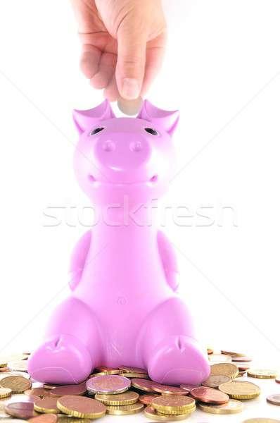 The pink pig. Stock photo © asturianu