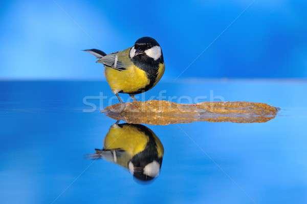 Teta água pequeno amarelo branco Foto stock © asturianu