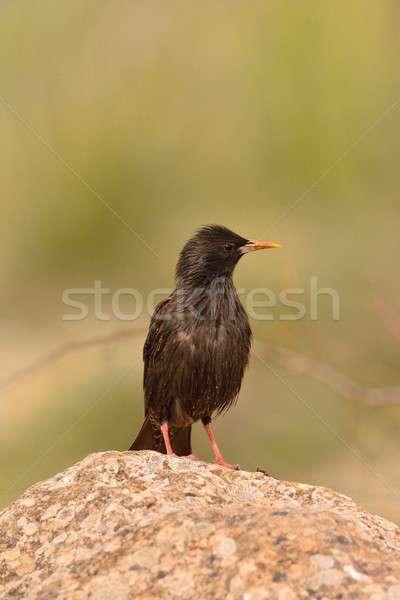 Feddhetetlen kő barna élet hívás gyönyörű Stock fotó © asturianu