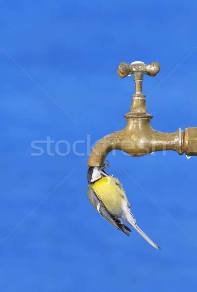 Stock photo: Thirsty.
