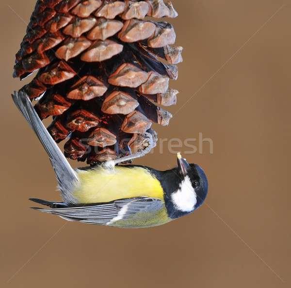 Тит еды дерево природы саду Сток-фото © asturianu