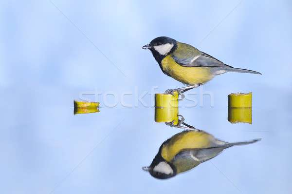 Stock photo: Great tit