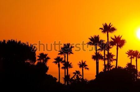 Amazing landscape of palm trees in sunset Stock photo © asturianu